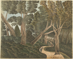 Woodland scene, Ootacamund.  An English family walking on a winding path